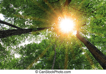 Sunburst in the forest for nature background