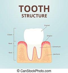 sunde tænder, ordningen