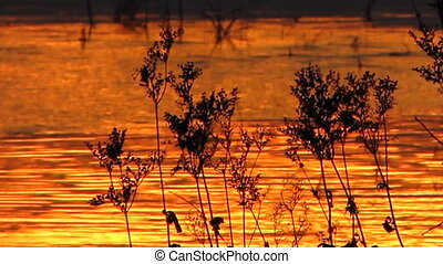 Sundown 29 1 - Solar patches of light on water.