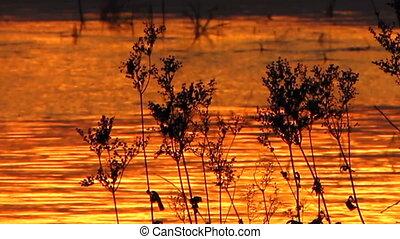 Sundown 29 - Water reflecting a sunset.