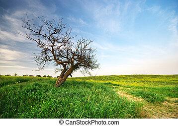 sundown., ensam, träd