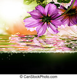 Sundown exotic tropical.Nature floral beautiful background