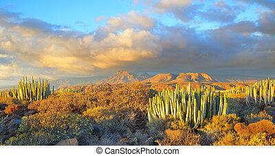 Sundown in Tenerife