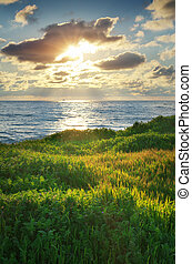 Sky, sea, and green grass.