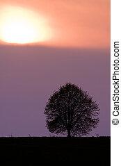 sundown - alone tree and purple sundown