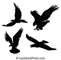 SunEagleBlack(10).jpg - Flying eagles silhouettes on white...