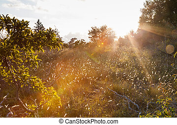 Sunflare in an autumn nature landscape - Nature in Sweden,...