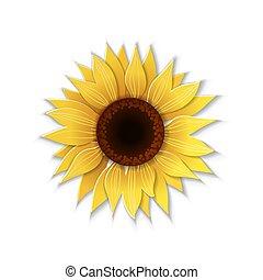 sunflower., ペーパー, 芸術
