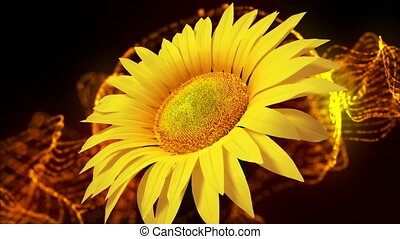 Sunflower - Abstract motion background