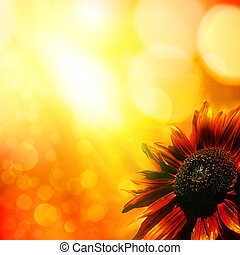 Sunflower. Abstract natural backgrounds
