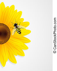 Sunflower and bee on white background.