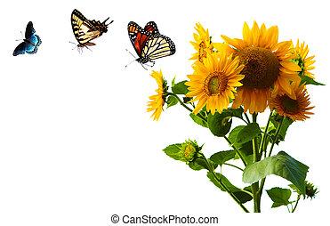 Sunflower and Butterlies