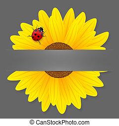 Sunflower and ladybird on grey background.