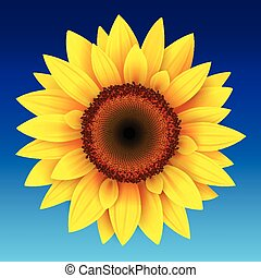 Sunflower background, yellow flower over blue sky, vector...