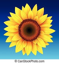 Sunflower background, yellow flower over blue sky, vector...
