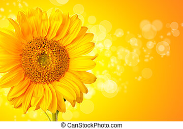 Sunflower blossom detail with abstract shiny background