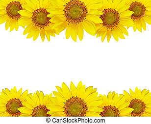 Sunflower border arrangement