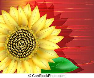 Close-up of sunflower. Digital illustration. Gradient Mesh. Filters.