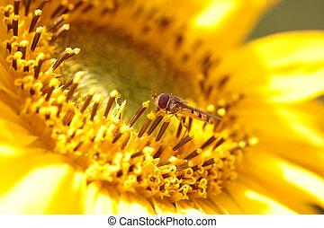 Sunflower - Close up of a bright yellow sunflower bouquet...