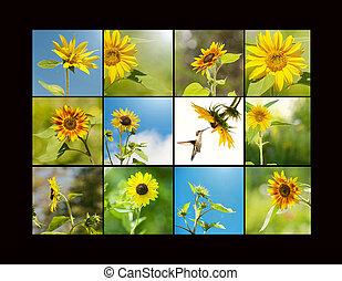 Sunflower collage.