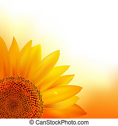 Sunflower, Vector Illustration