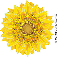 Sunflower over white. Vector illustration, EPS 8, AI, JPEG