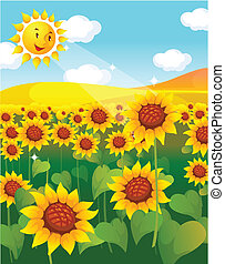 sunflower field and sun