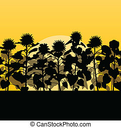 Sunflower field landscape vector background concept