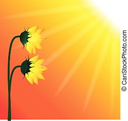Sunflowers growing with the sunrays in a sunny day fine art graphic illustration vector image design background template artwork banner