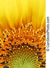 Sunflower Flames Detail
