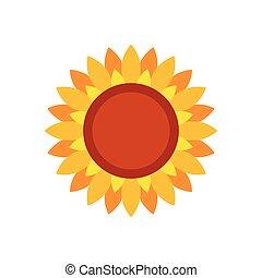 Sunflower flat on a white background. Vector illustration