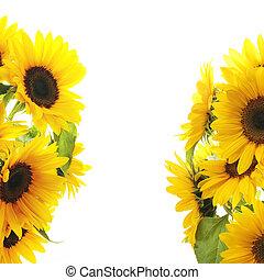 Sunflower Frame - On white background