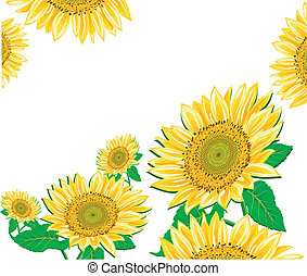 Sunflower framework - Vector illustration containing floral...