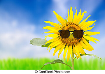 Sunflower glasses with a sky background,