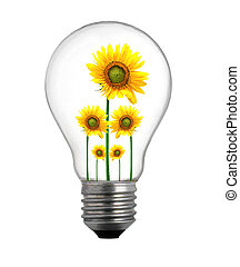 sunflower growing inside the light bulb
