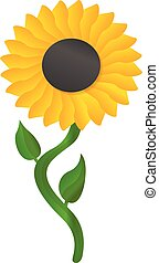 Sunflower icon, cartoon style