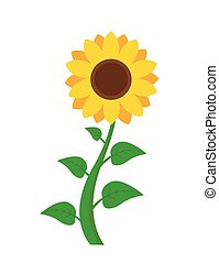 Sunflower icon isolated on white background