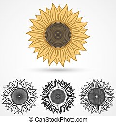 sunflower icon, vector illustration