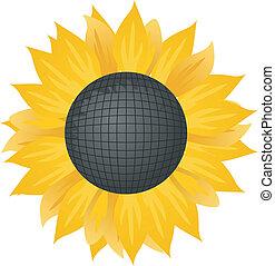 sunflower., illustration, vecteur
