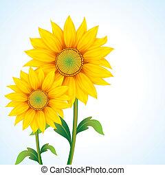 Sunflower - illustration of pair of sunflower on abstract...