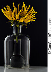 Sunflower in a flask with water on black background
