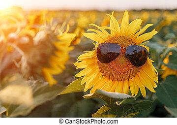Sunflower in black sunglasses against the setting sun.