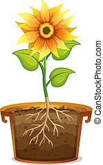 Sunflower in clay pot on white background illustration