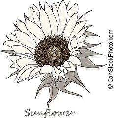 Sunflower isolated on white background illustration