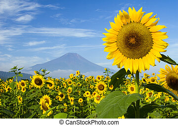 Sunflower IV - A field of sunflowers with Mount Fuji in the...