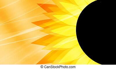 Sunflower Looping Background