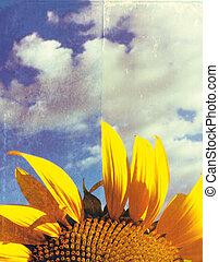 sunflower on a grunge background