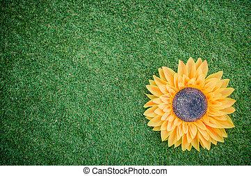 Sunflower on artificial grass