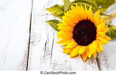 Sunflower On Blue White Wooden Background