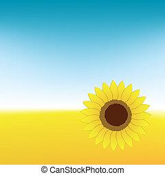Sunflower on summer field